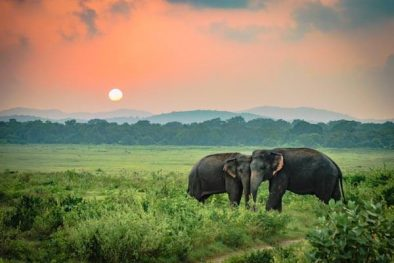 Private-Day-Tour-in-Udawalawe-National-Park