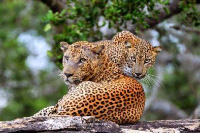 Tagesausflug Yala Nationalpark