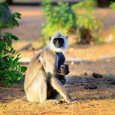 Monkey-at-Yale