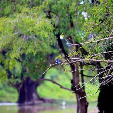 Schutzgebiet Sigiriya