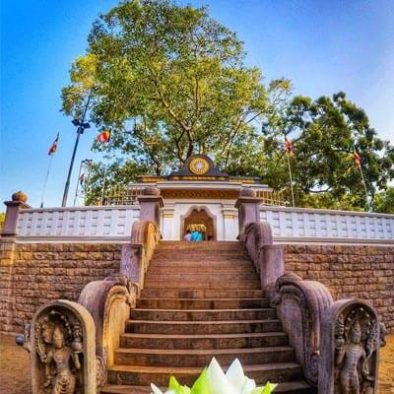 Siri-Maha-Bodhi-Tree