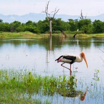 184 Arten von Vögeln