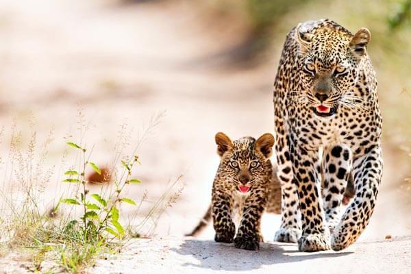 Wildlife Rundreise in Sri Lanka