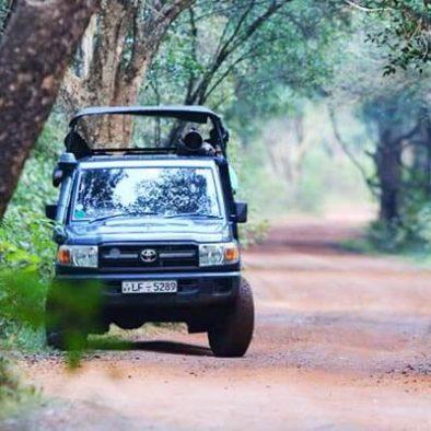 Wilpattu-Jeep-Safari