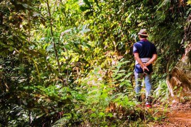 Sinharaja Dschungel-Safari Tagesausflug feature